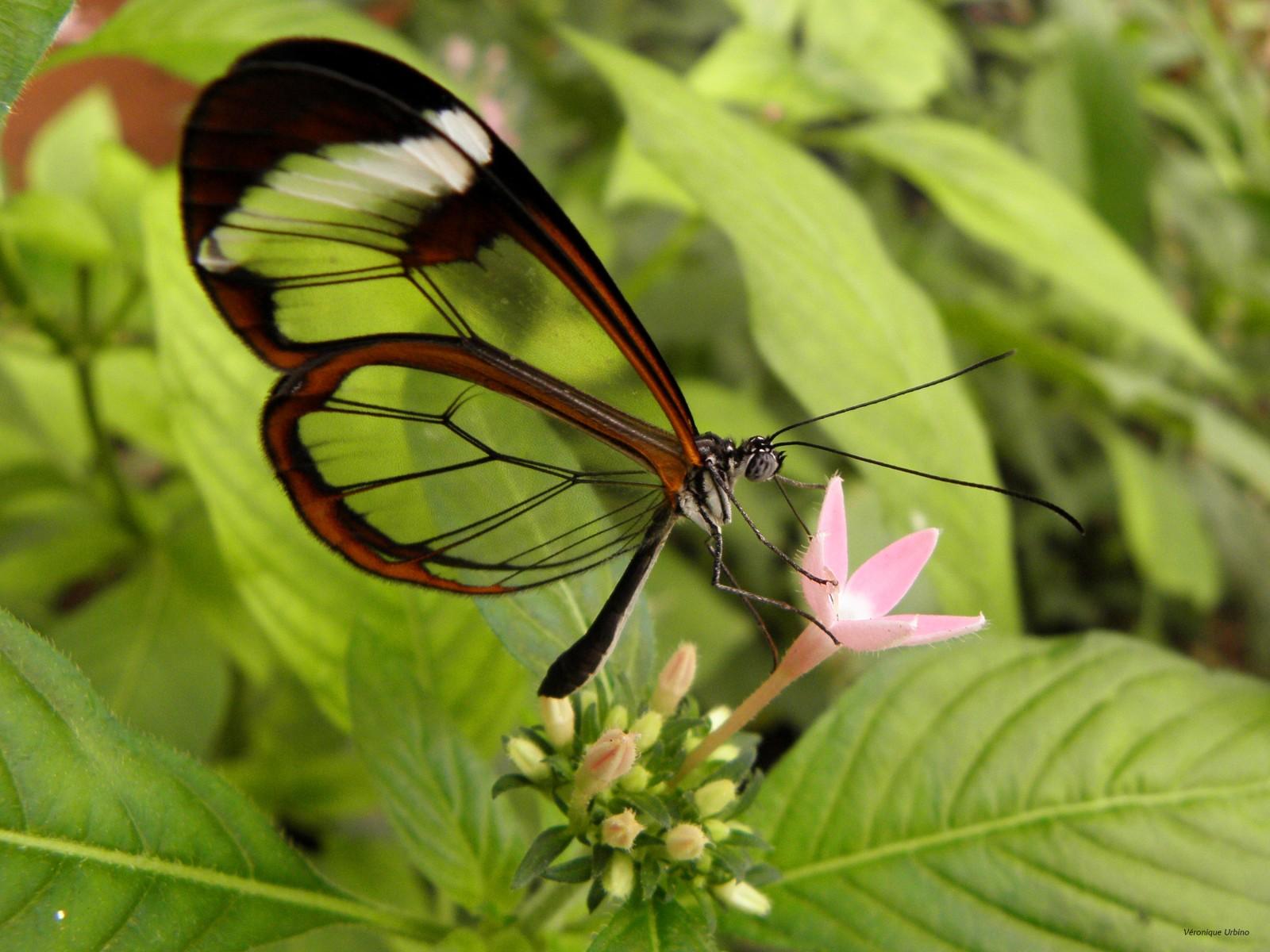 Estime de soi le papillon rare un monde meilleur - Images de papillon ...